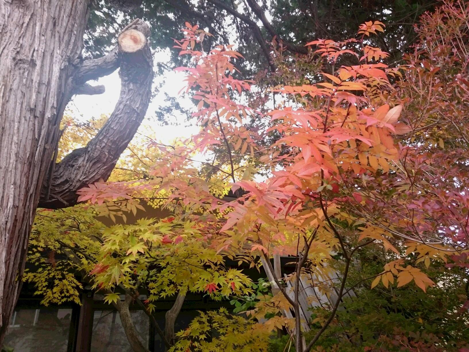 津軽 草木染 糸